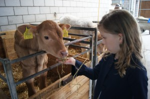 Sophie patting a calf